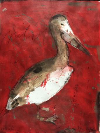 Pélican rouge - GORODINE_ALEXIS_982