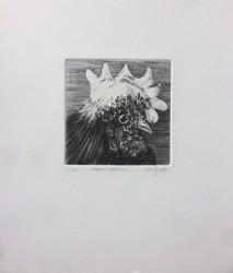 Oiseau-Veilleur, n° 3/30