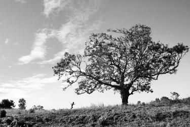 Série arbres, Farafangana, 2012