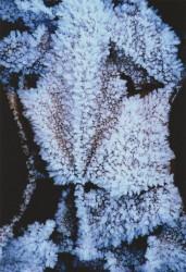 Militaire sous son heaume gelé, Jardin de Bagatelle, 2012 - n° 1/3
