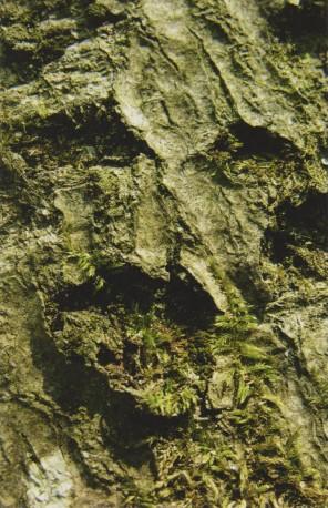 L'homme naturel de JJ Rousseau, Ermenonville, 2007 - n° 1/3 - MOLLARD_CLAUDE_147