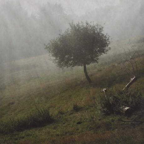 Arbre seul - PRAUDEL_ANDOCHE_501