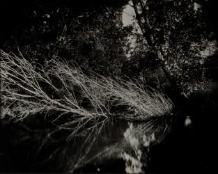 L'arbre blanc, n° 1/1
