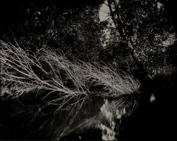 L'arbre blanc, n° 1/1 - ANTOINE_ERIC_22