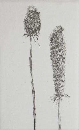 Calissouriettes bouclautées, n° 3/14 - GRALL_NATHALIE_937