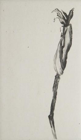 Senilaphite radoteur, n° 4/14 - GRALL_NATHALIE_938