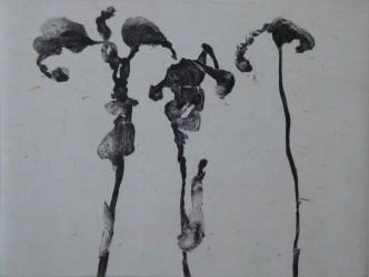GRALL Nathalie - Dans la peau des fleurs 2 / 30