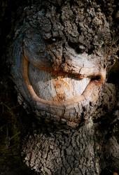 L'ogre débonnaire. Sur l'arbre du chemin, Sisteron, 2019 - n° 1/3