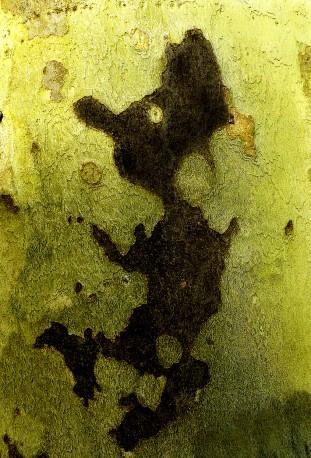Le petit lutin de la forêt. Détail de tronc de platane, Forêt de Compiègne, 2018 - n° 1/3 - MOLLARD_CLAUDE_161
