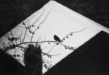Black bird (2003-2012)